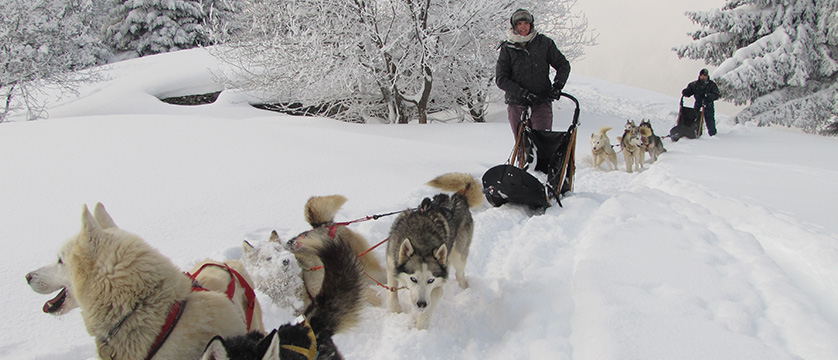france_chamonix_Dog-Sledding-Chamonix.jpg